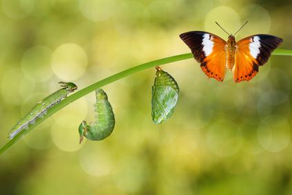 """Die Reise zu deiner Bestimmung """"Schmetterlingserwachen"""""""